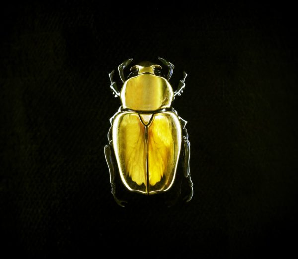 c22ct Gold Jewel Beetle Brooch by Shaun Leane photograph by Nick Knights SHOWstudio (2)