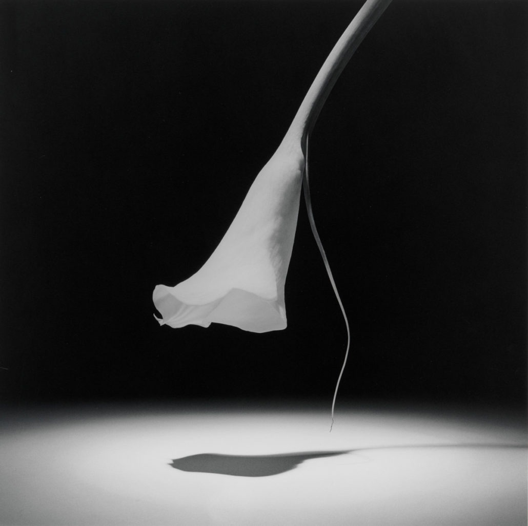 Robert Mapplethorpe at the Guggenheim - Robert Mapplethorpe, Photography, New York, mapplethorpe, Guggenheim, Exhibit, Art, 2019